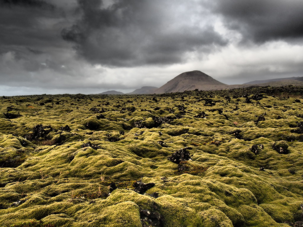 Craggy moss in Iceland